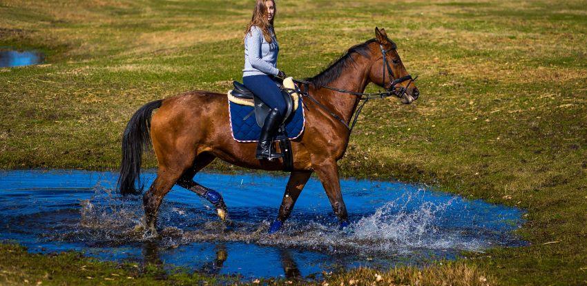 Wiosenny plener na koniach…